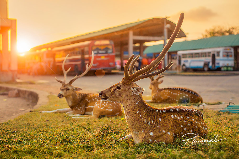 Sri Lanka, foto Martins Plume, pluume.lv (17)